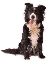 OffLeash SoCal Dog Training