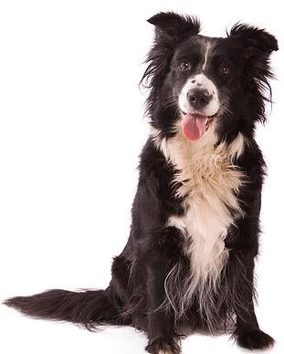 Expert Dog Training in Woodland Hills