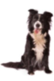 dog sit training behavior modification aggression board and train puppy basic