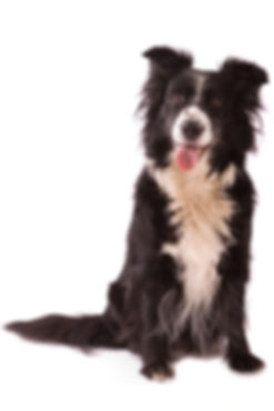 Paws and Claws Pet Shop Advice Shaftesbury