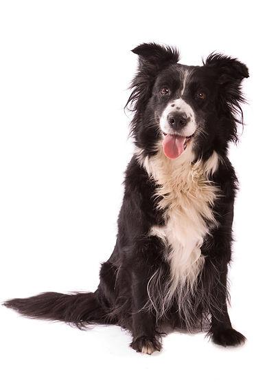 Mobile Dog Grooming Croydon UK