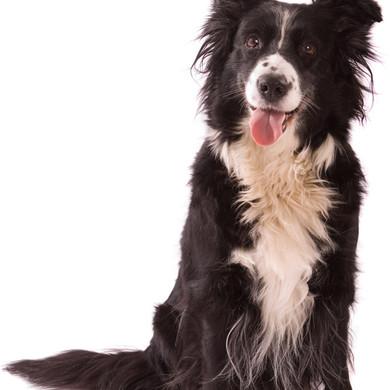Hundeportrait im Fotostübli