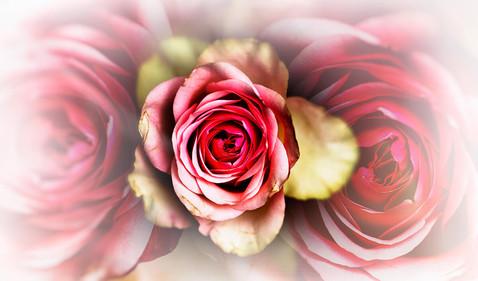 flowers 2021.06 t.mardo 02 024dcomp.jpg