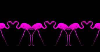 flamingosession