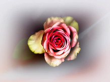 flowers 2021.06 t.mardo 02 024comp.jpg