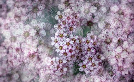 flowers 2021.06 t.mardo 02 024a2comp.jpg