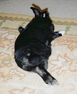 George, The three legged hare