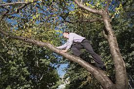לרדת מהעץ