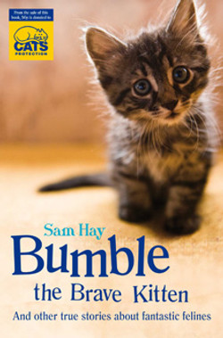Bumble the Brave Kitten