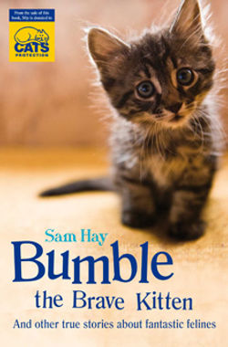 Bumble the Brave Kitten.jpg