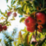 image bee fruits (1).png