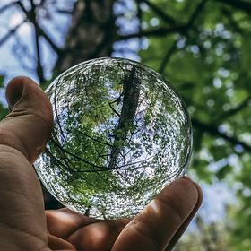 boule transparenteréfléchissante arbre