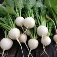 Hakuri Salad Turnips