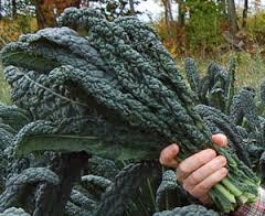 Week 10 - Dino Kale