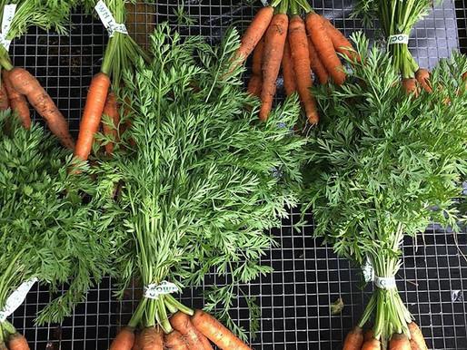 Week 16 - Carrots