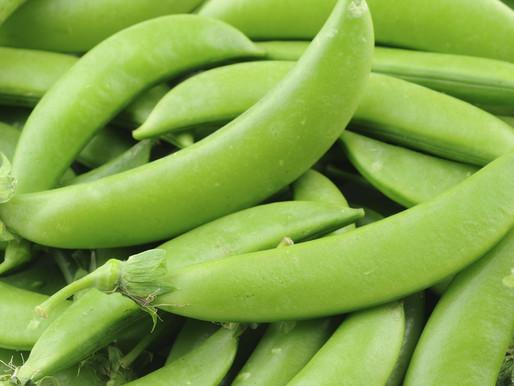 Week 5 - Sugar Snap Peas