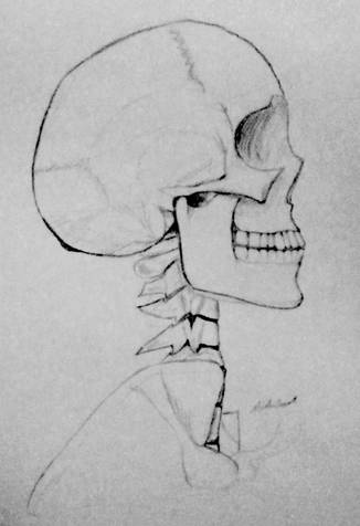 Skull and Spine