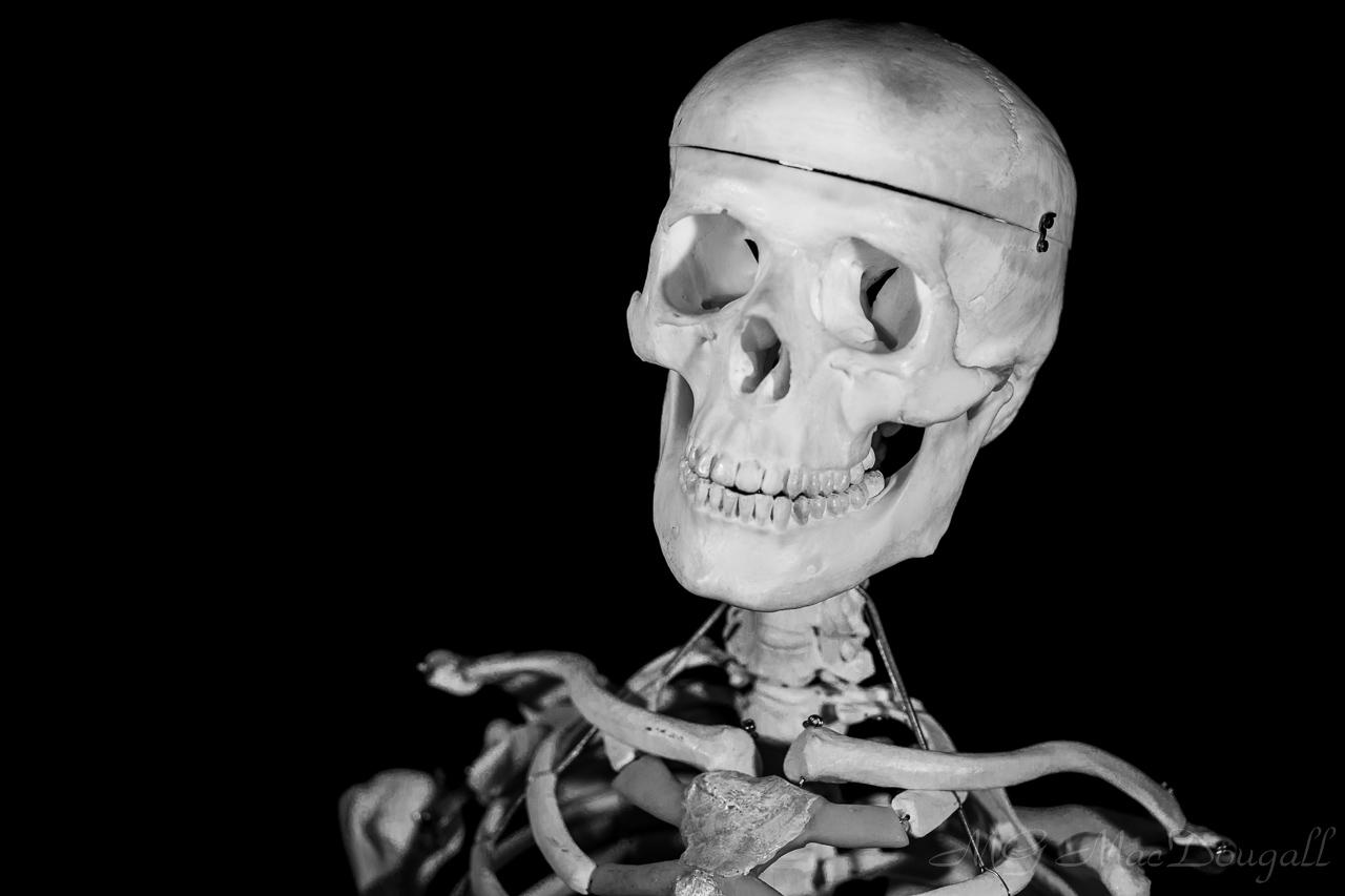 Herman The Skeleton