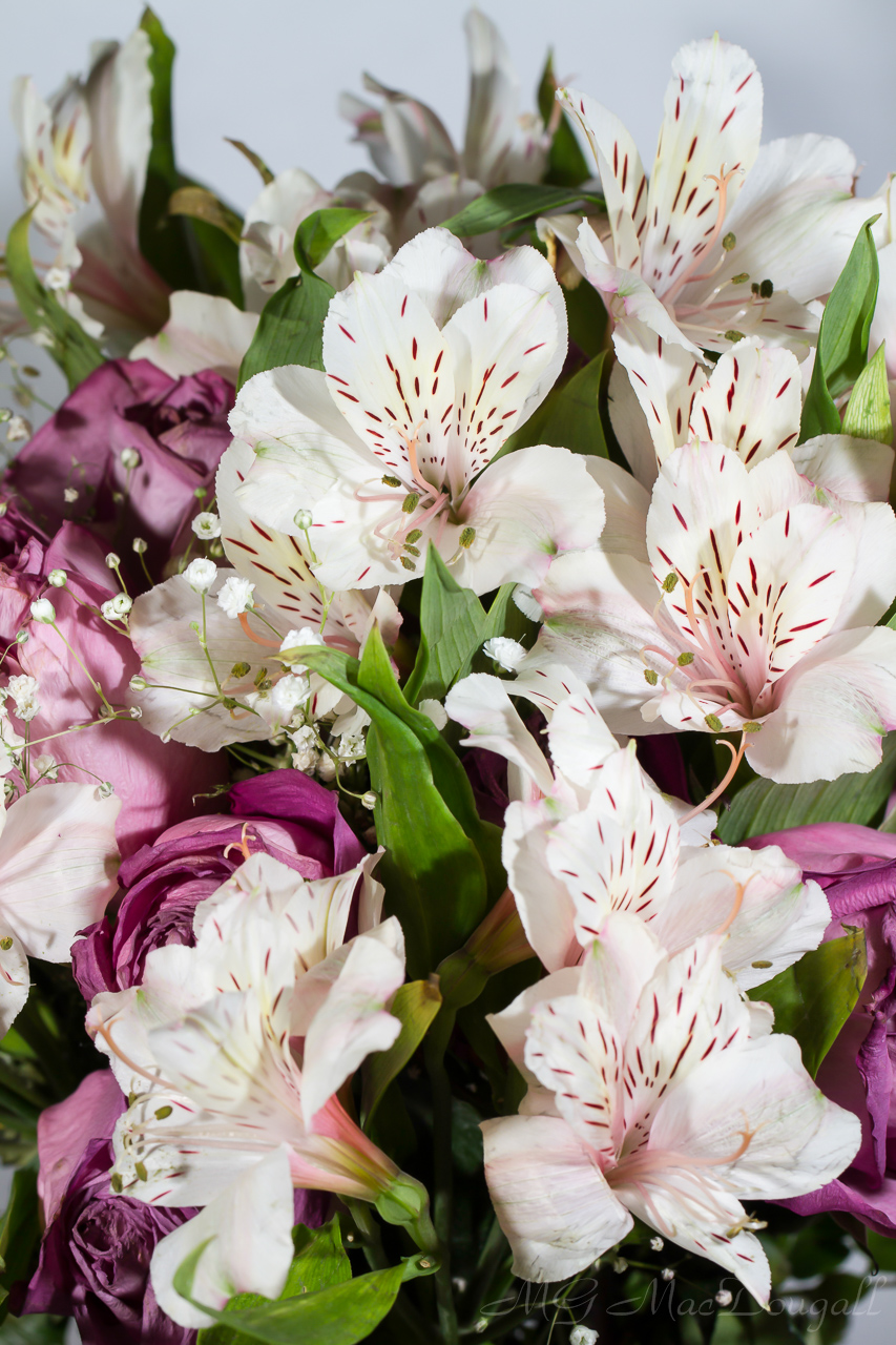 Flowers-7035