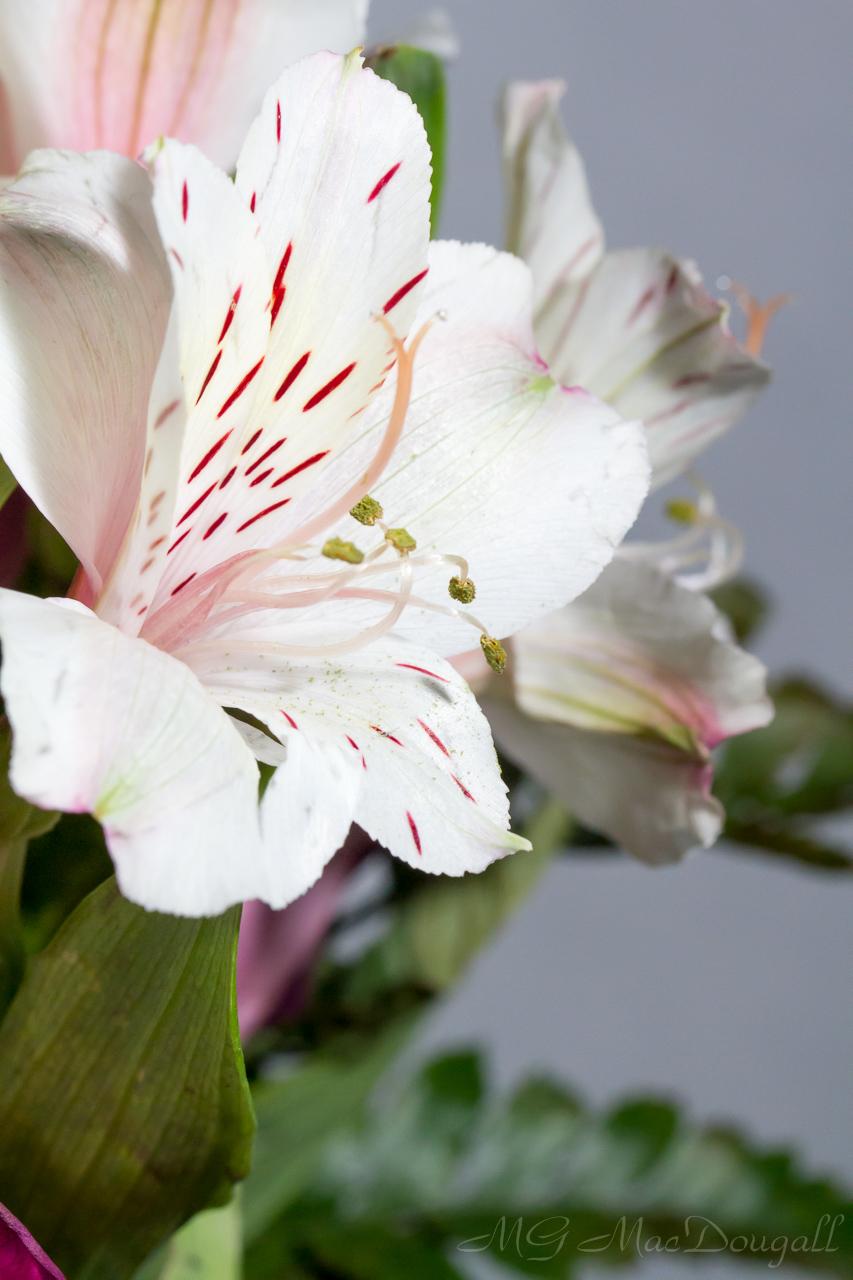 Flowers-7013