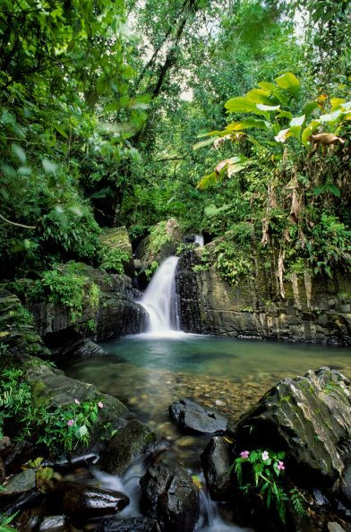 Wanderlust Wednesday: El Yunque National Forest, Puerto Rico