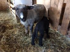 Adalene and Lamb.jpg