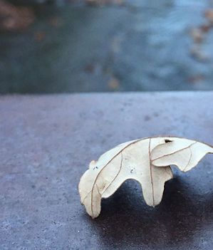 Dry, curled oak leaf atop the railing of a bridge