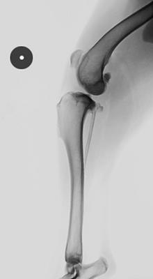 radiography-1.png