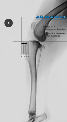 radiography-5.png