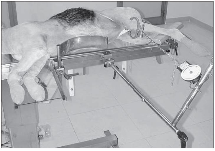 Fig. 7 Positioning for traction of the femur. The traction is exerted by a traction stirrup applied to the femoral condyle. The foot is kept elevated by a limb rest, to maintain axial alignment of the femur.