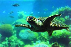 Aqaba Underwater.jpg