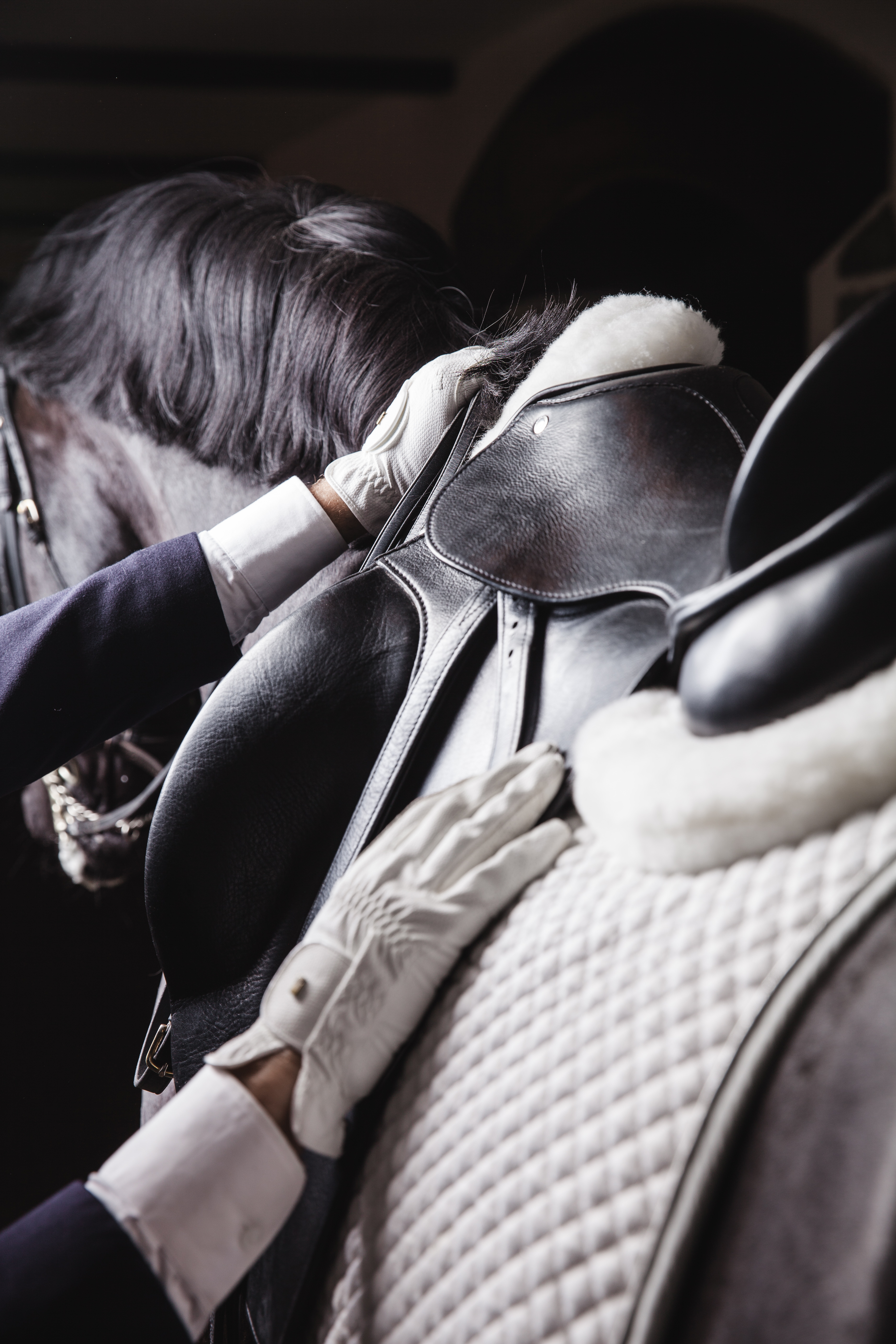 Professional male equestrian rider saddle up horse for dressage on training or competition - Unrecog