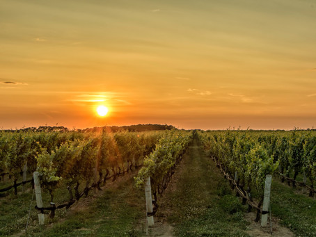 Of Vineyards, Plumblines and Mirrors