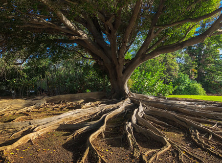 Deep Roots, Broad Branches, and Irrigation for Others