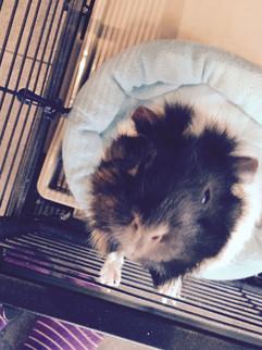 My Precious Piggy: Truffle