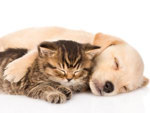 The Benefits of Cuddle Buddies
