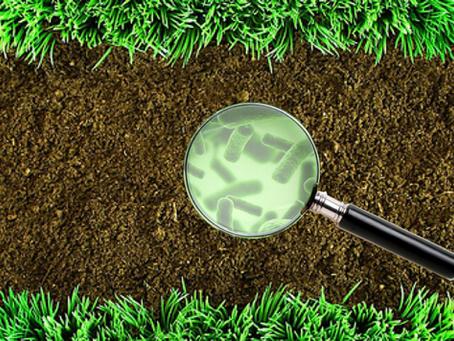 Malacidins: Finding New Antibiotics in the Dirt