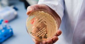 Why is Candida Auris Creating a Healthcare Panic?
