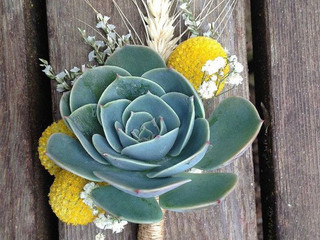# 2 - Les Succulentes