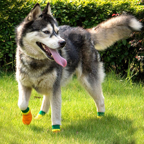 Puppy Love Neon Anti-Slip Waterproof Sock Shoes