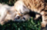 Banner-dog-cat.jpg