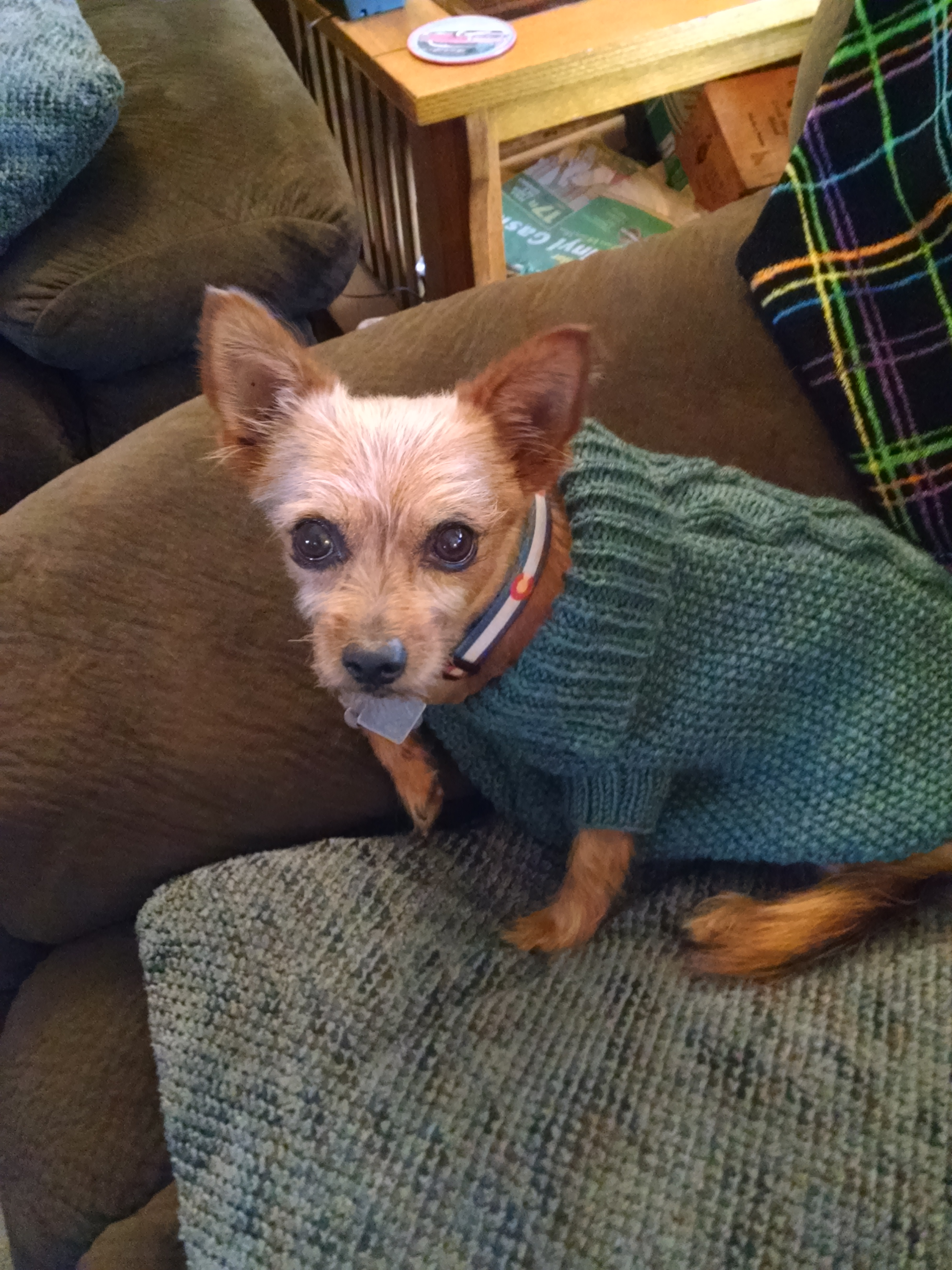 Maggie's Dog Jacket Paton's DK