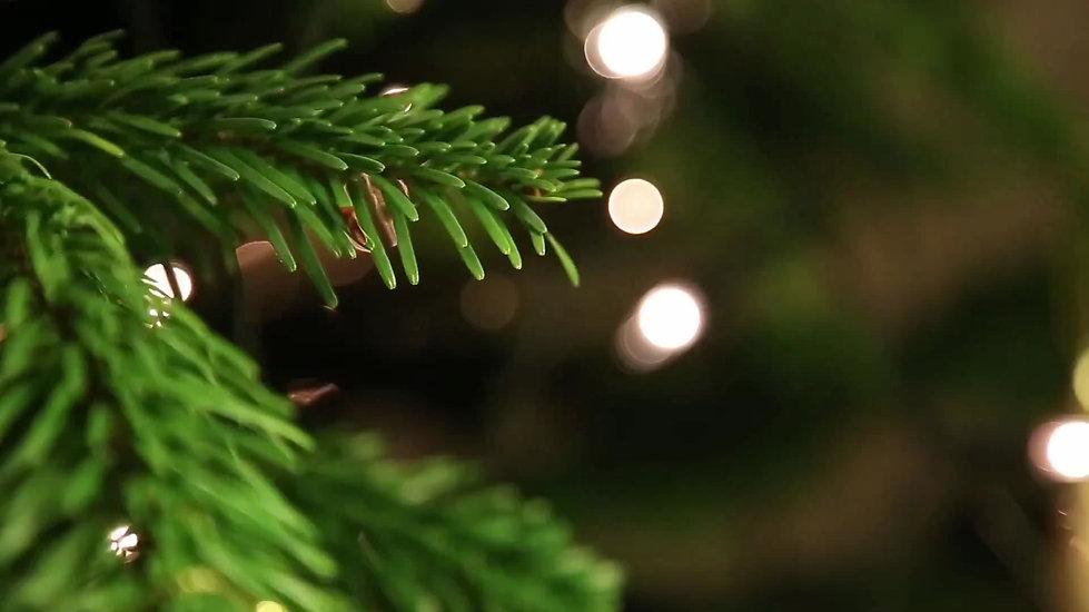 Welpen in der Vorweihnachtszeit