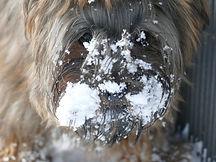 Joline im Schnee