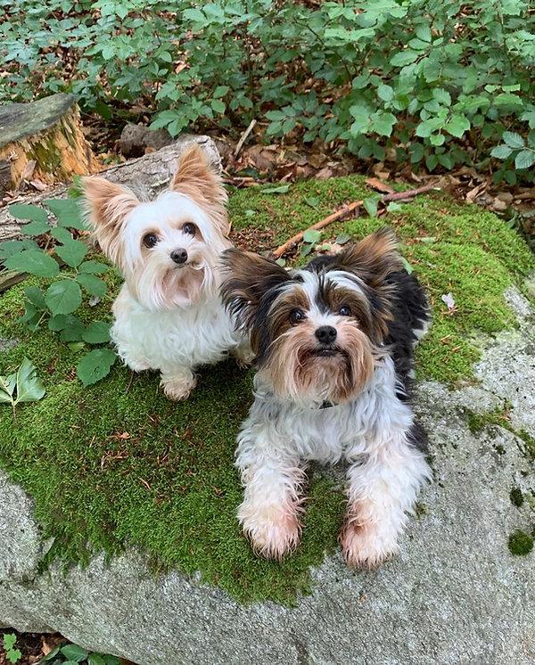 Suri und Donna (2).jpg