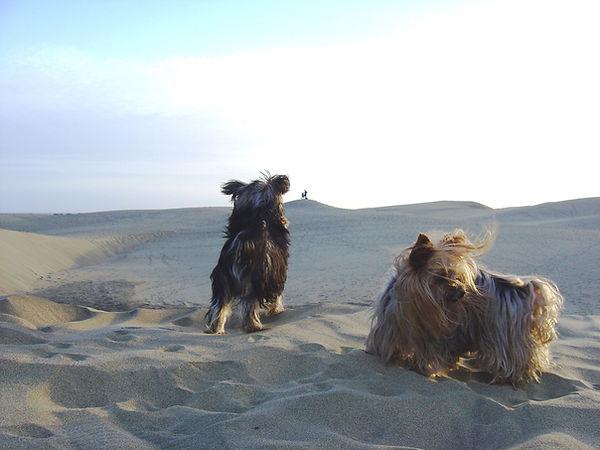 Delina und Rocky auf Gran Canaria.JPG