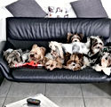 sofa-fast-alle Hunde.jpg