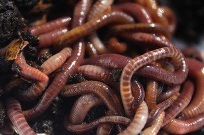 Vermiculture Class
