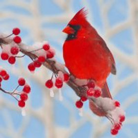 Winter Cardinal Wooden Puzzle