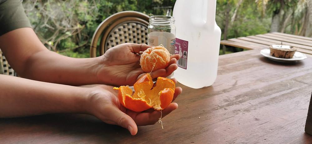 A man has peeled a mandarin in one piece.
